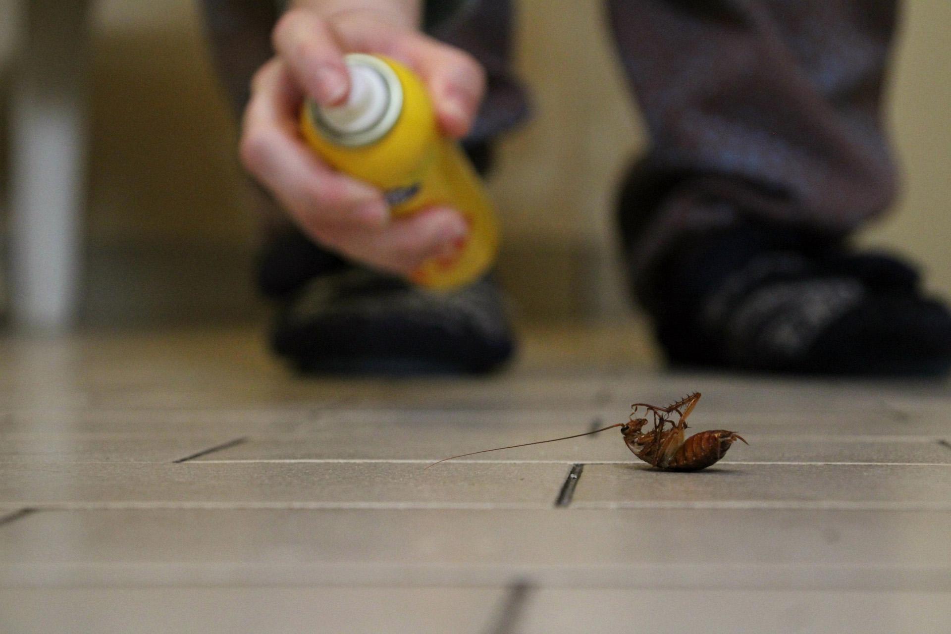 Es casi imposible matar a una cucaracha