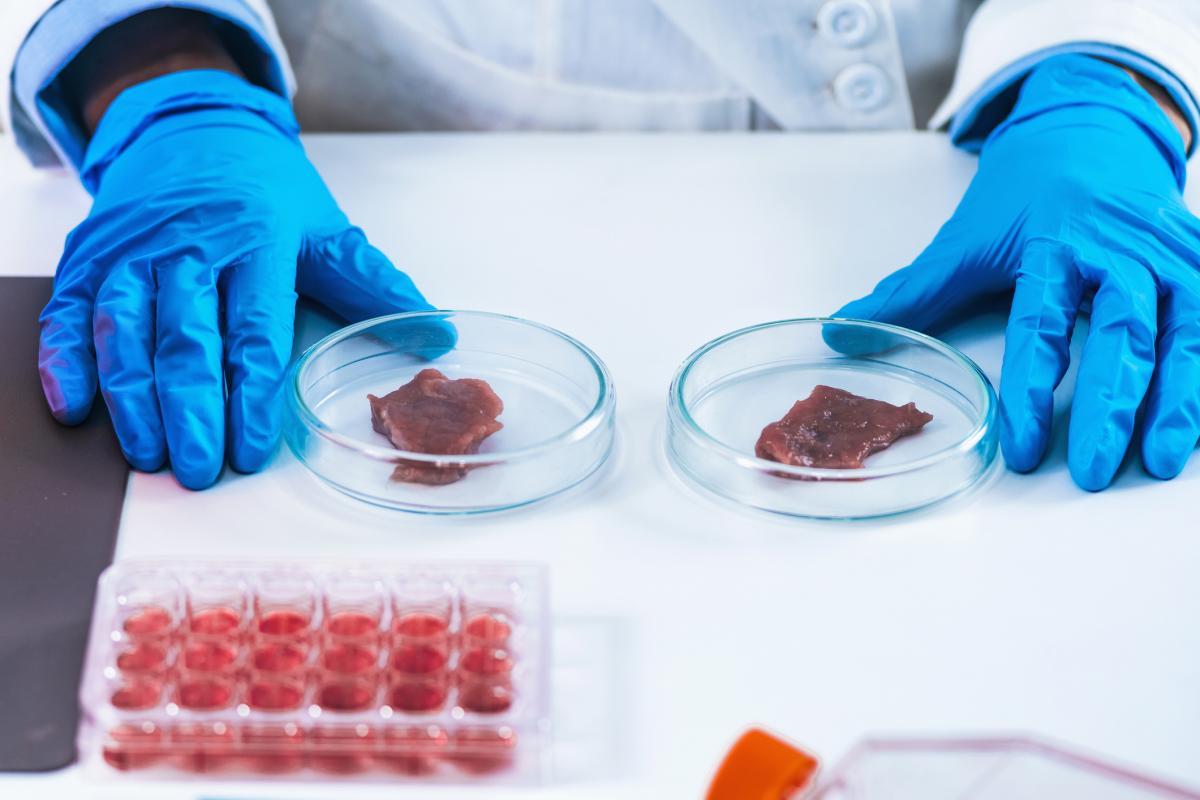 Carne de laboratorio.