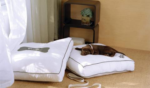 hoteles mascotas valencia