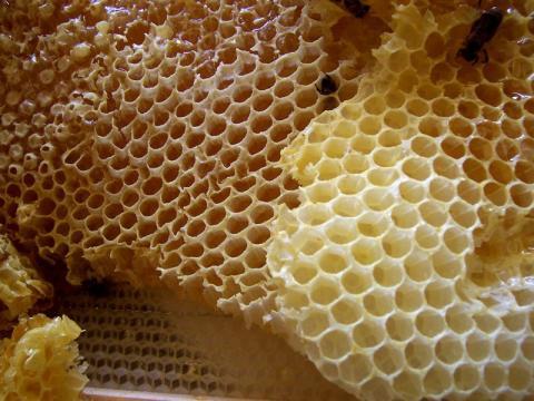 Este panal de abejas puede provocar tripofobia.