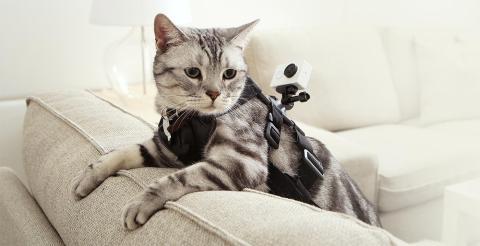 Gato con cámara deportiva de acción