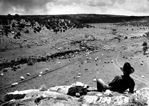 Navajo vigila su rebaño de ovejas en 1940