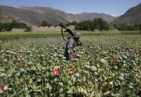 Operación antidroga en Afganistán