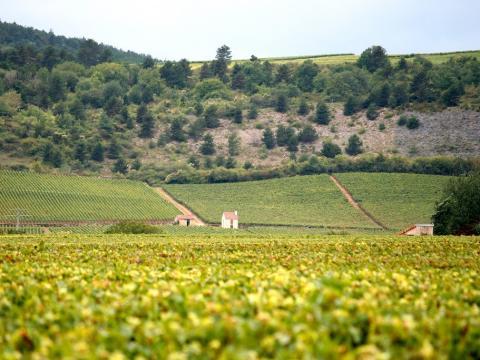 Viñedos de Francia