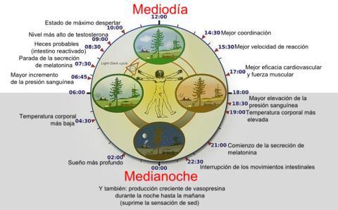 circadiano: reloj biológico