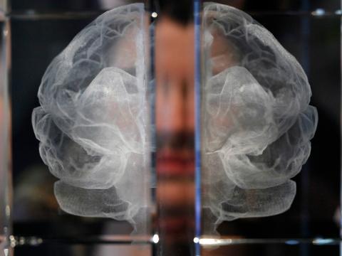 Imagen de un modelo de cerebro