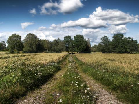 Småland (Suecia), el lugar donde se crió Kamprad