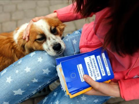 Chica con su perro mascota y el pasaporte de animales
