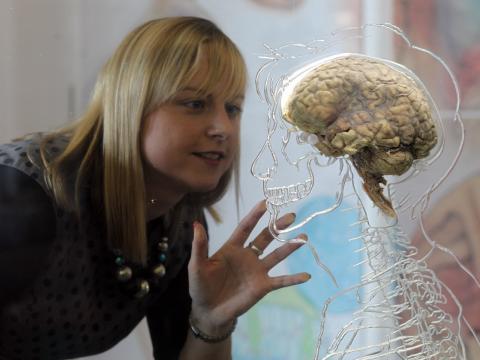 Mujer mirando un esqueleto con cerebro de plastico