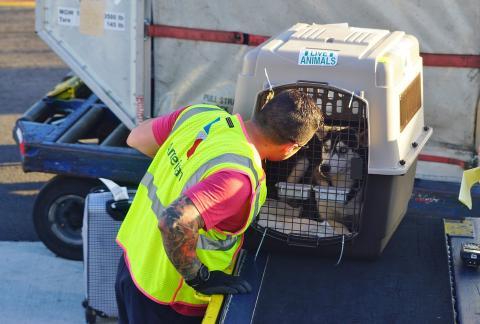 trabajador encargado de cuidar a los animales en el aeropuerto mira a un perro en una jaula