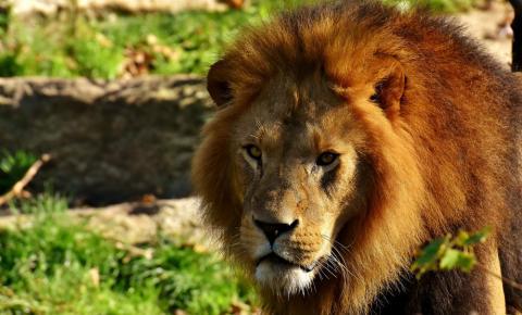 Es posible alquilar todo tipo de animales domésticos y salvajes para diferentes clases de eventos y para el cine.