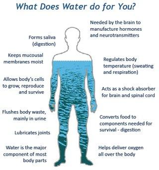 Un 65% del cuerpo humano está formado por agua.