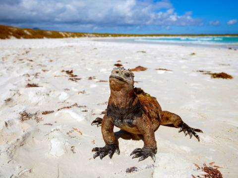 Una iguana marina en las Islas Galápagos