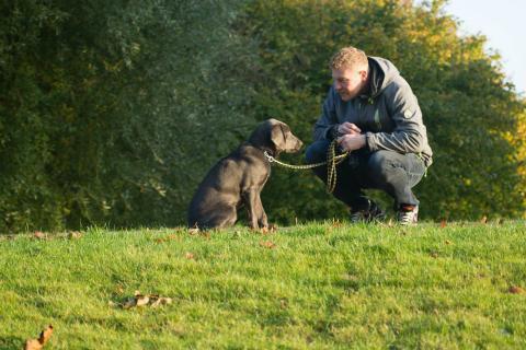 Un amo con su perro.
