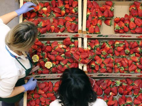 Cajas de fresas en un comercio