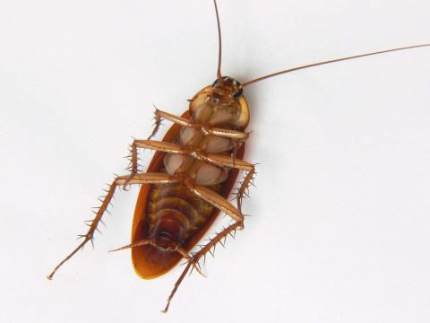 granja cucarachas IA