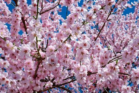 Mejor evitar los jardines, bosques y parques llenos de polen.