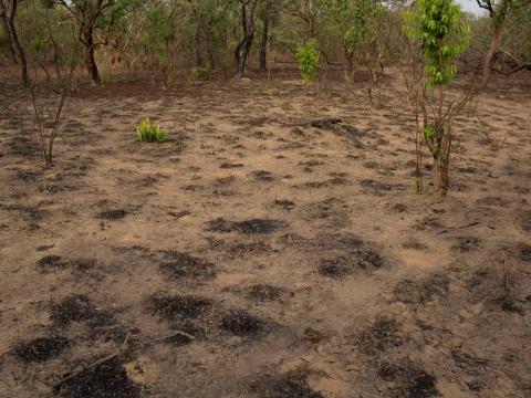 Área deforestada en Coli.