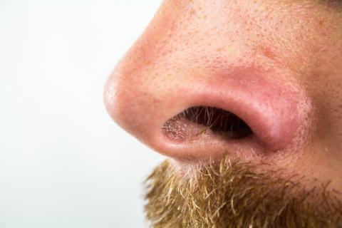 Fosas nasales.