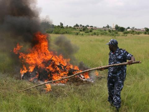Un policía togolés quema marihuana incautada.