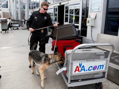 perro policia registrando aeropuerto