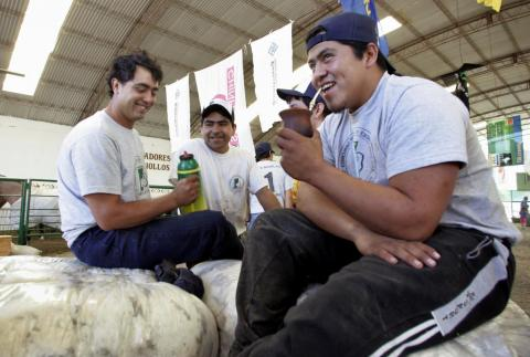 Argentine shearers Gaston Morales (R), Lazaro Pichon (C) and Alfonso Alonso drink 'mate' (herbal tea) as they sit on piles of wool.