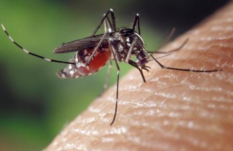 Cómo curar las picaduras de mosquito más rápido, según la ciencia
