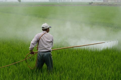 pesticida cultivo
