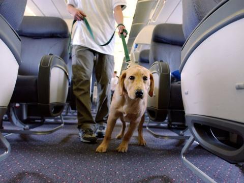 Un perro de apoyo en un avión.