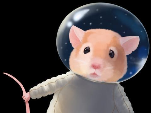 Ratón en el espacio