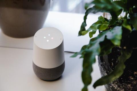 Google Home Planta