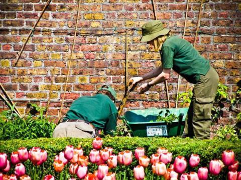 Jardineros cuidando plantas
