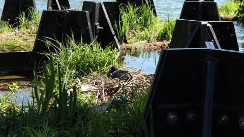 It's not just for humans, either. The Recycled Island Foundation says the park's plastic hexagons were designed to be prime habitat for native waterbirds, plants, fish, and even algae.