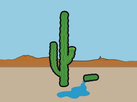 Mito: El líquido de un cactus puede salvarte de morir de sed [RE]