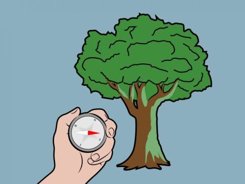 Mito: El musgo está en el norte de un árbol [RE]