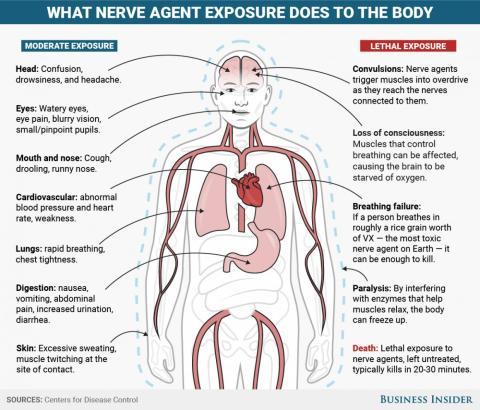 Los agentes nerviosos como el tabún, sarín, somán, GF y VX tienen efectos similares en el cuerpo, dependiendo de la ruta de exposición.