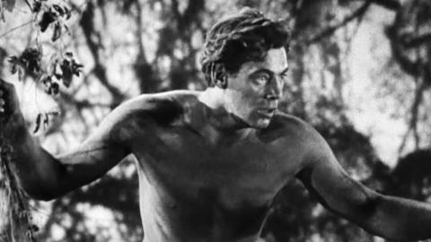 Tarzan Pelicula