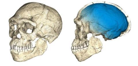 Esos descubrimientos llevaron a una nueva idea: quizás el <em>Homo Sapiens</em> evolucionó por todo África en grupos interconectados [RE]