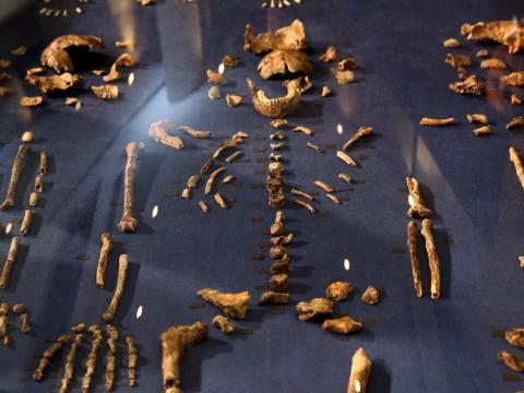 También hemos descubierto homínidos con los que nuestros ancestros pudieron coexistir [RE]