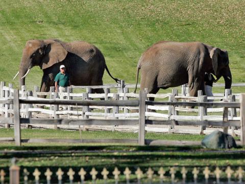 Aunque Sycamore Valley Ranch ya no tiene animales exóticos como los elefantes, aún puede encontrar cerdos, corderos y una llama en la propiedad [RE]