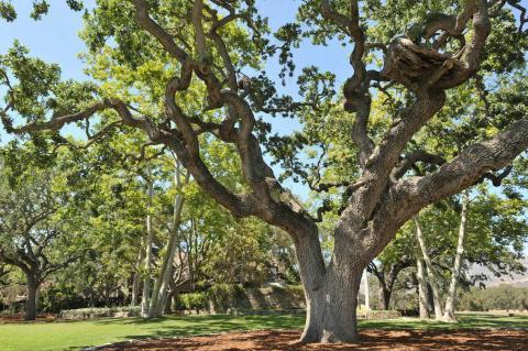 Se le cambió el nombre a Sycamore Valley Ranch por las colinas onduladas, majestuosos árboles de sicómoro, magníficos robles y exquisitos terrenos bien cuidados por los que se conoce al Valle de Santa Ynez [RE]