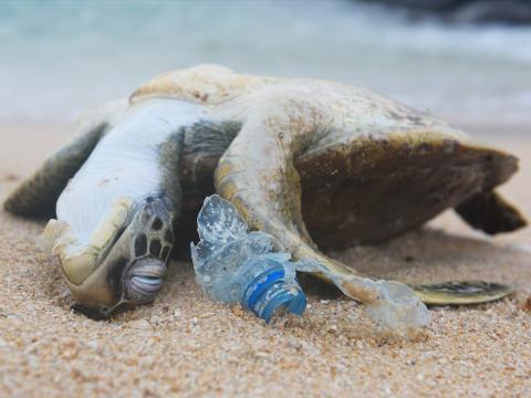 [re] las colillas son la basura marina más numerosa