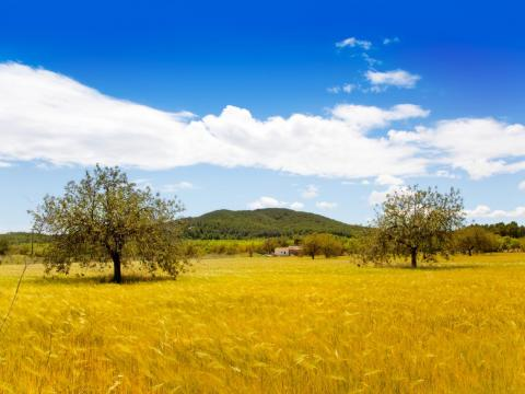 There's a stunning variety of things to see in Ibiza. Once you head away from the main towns to the island's north, you'll find a vast, green countryside.