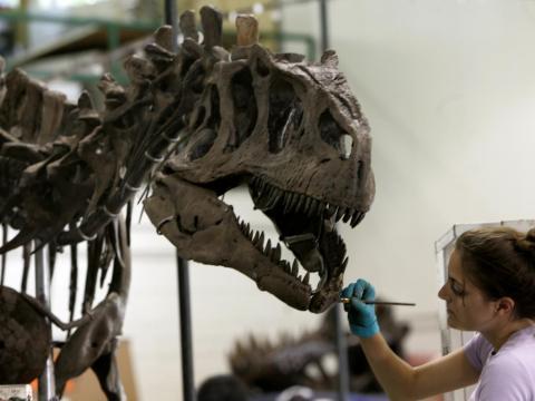 El fósil de un dinosaurio Allosaurus en Nueva Jersey en 2007.