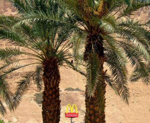 Israel tiene un McDonald's en medio del desierto de Negev. A pesar de estar en el desierto, recibe bastante tráfico turístico [RE]