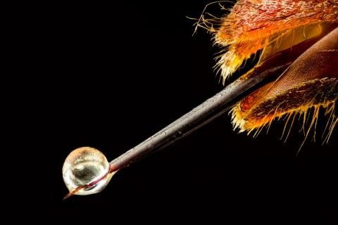 No. 19: Ouch — an Asian hornet with venom on its stinger.