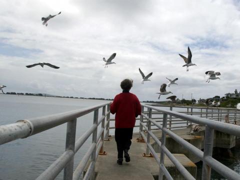 Los turistas todavía ven bandadas de aves.