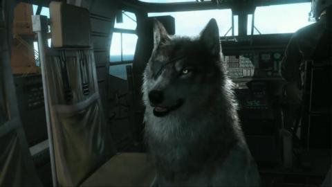 Good boy.
