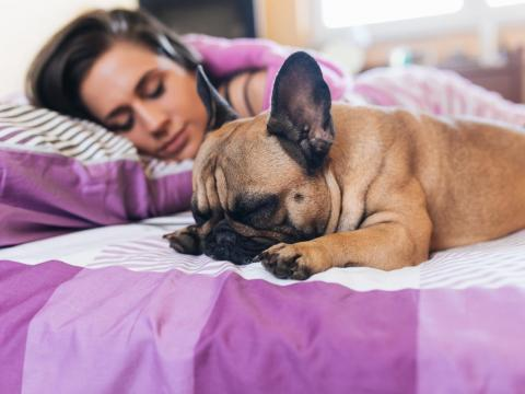 Pets can interfere with your sleep.