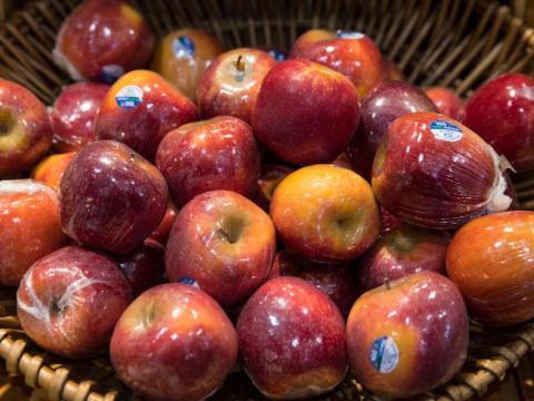 Las manzanas son un bocado seguro y saludable para los perros.